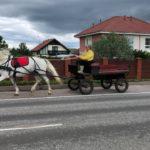 линейка для лошади kazenkin.ru фото 3