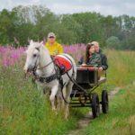 линейка для лошади kazenkin.ru фото 4