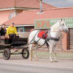 линейка для лошади kazenkin.ru фото 1