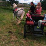 линейка для лошади kazenkin.ru фото 6