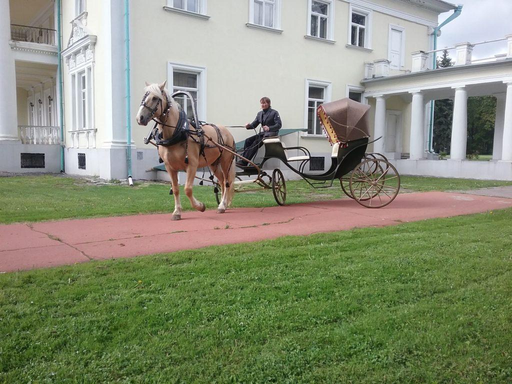 экипаж калеша для лошади