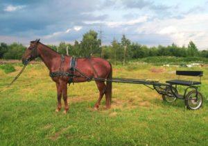 двуколка для лошади kazenkin.ru