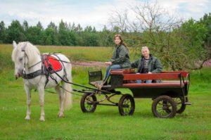 линейка для лошади kazenkin.ru