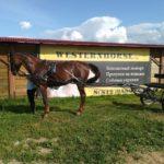 двуколка для лошади kazenkin.ru фото 1
