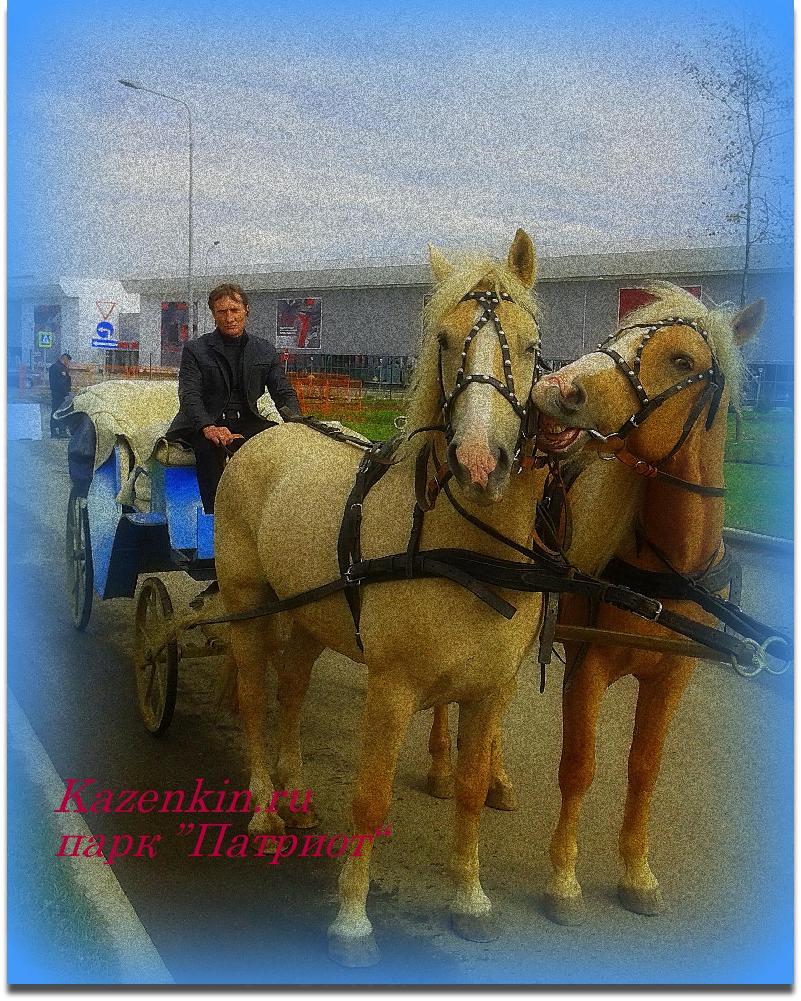 фото лошади Брусиловский прорыв, Парк Патриот, 2016 г., пара в открытом экипаже