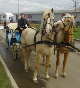 лошади на праздник, Парк Патриот, Брусиловский прорыв