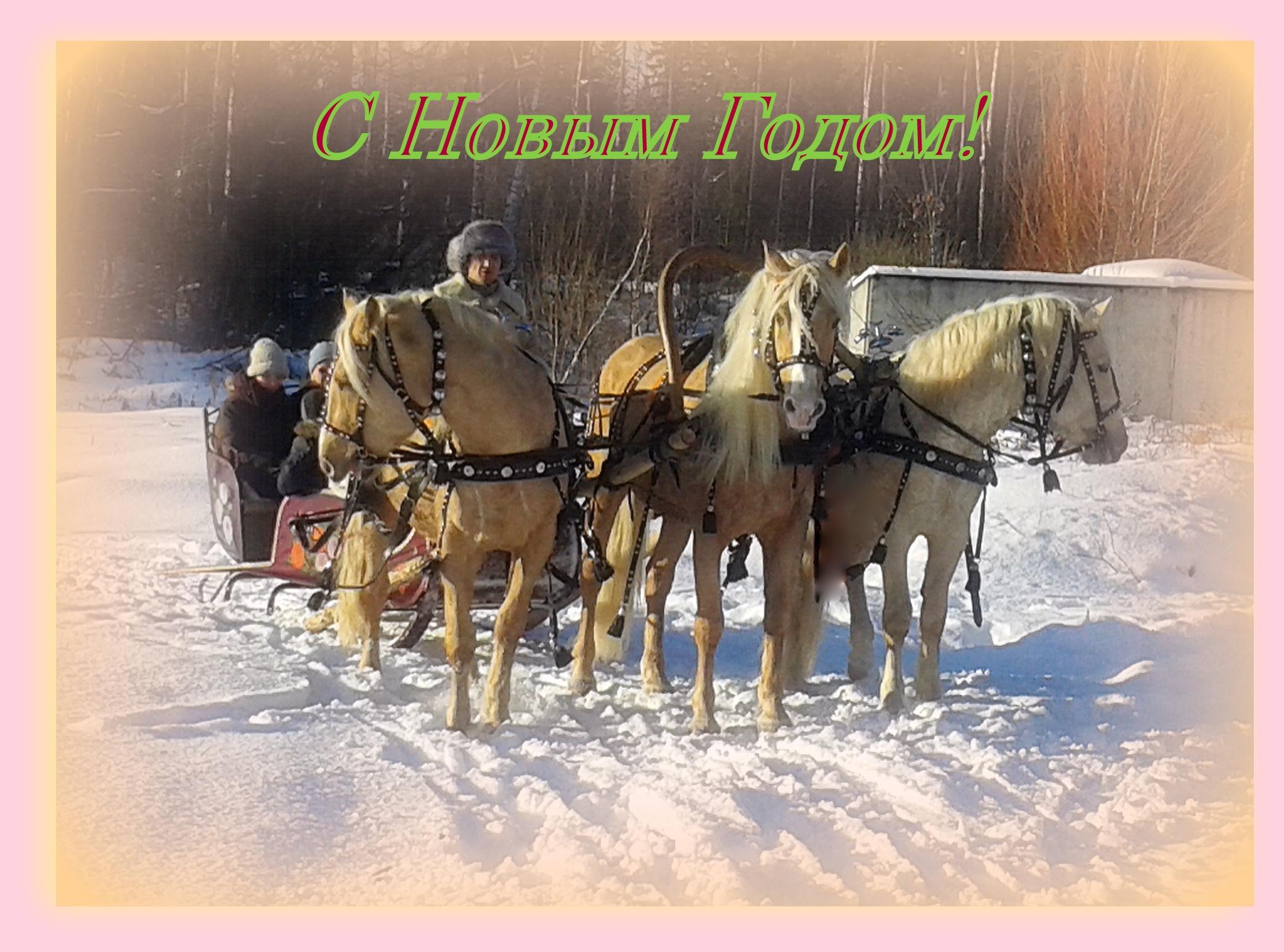 Катания на золотой тройке kazenkin.ru. лошади на праздник