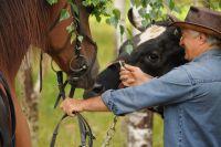 лошади для съемок