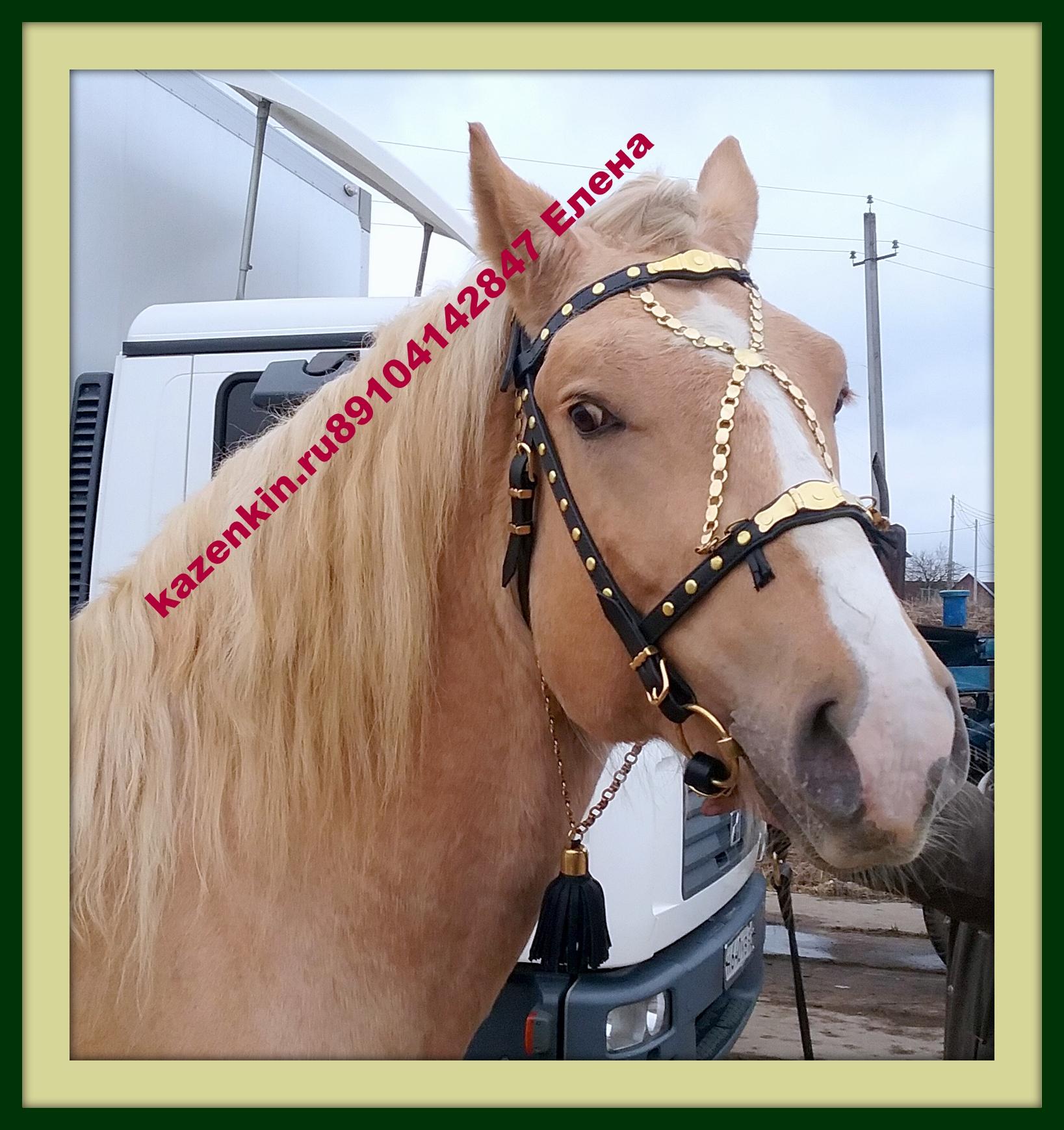 Уздечка для лошади: конструкция устройства 41