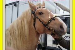 упряжь для лошадей парадная и рабочая в наличии