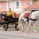 линейка для лошади kazenkin.ru фото 2