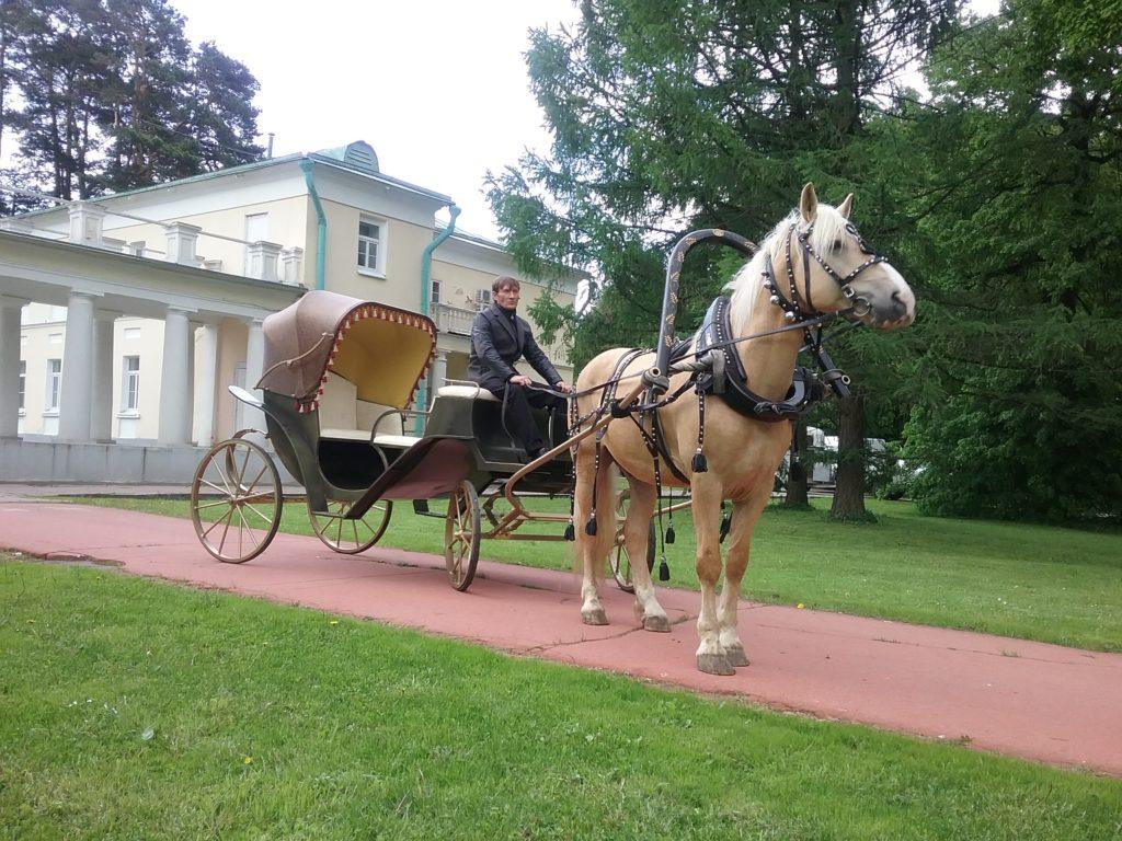 экипаж калеша с лошадью