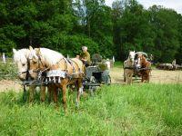 лошади для съемок пара лошадей в упряжи