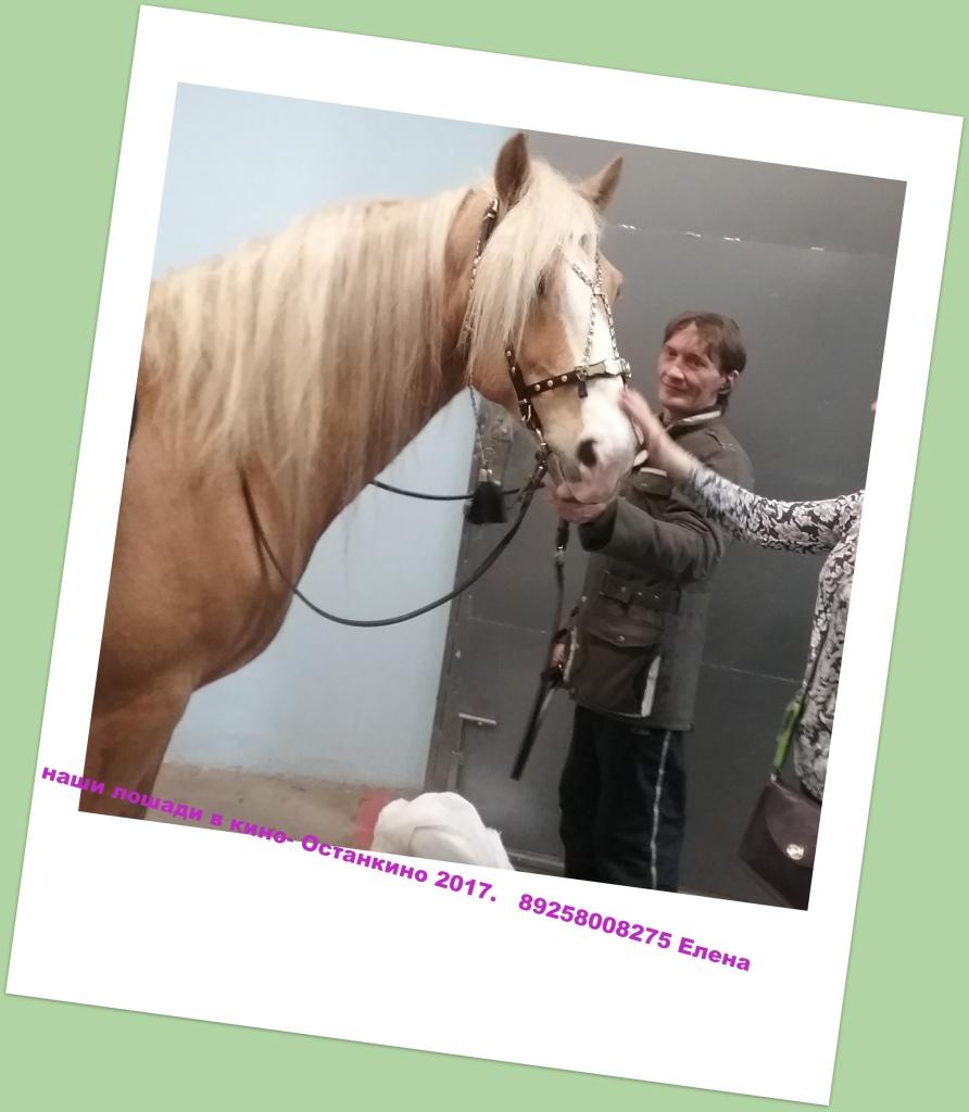 kazenkin.ru nashi-loshadi-v-kino- наши лошади в кино. Лошади для сьемок